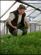 Wirral Watercress